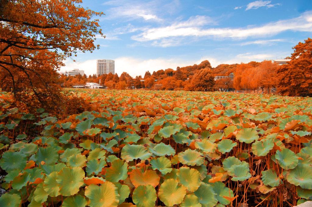 otoño en Tokio