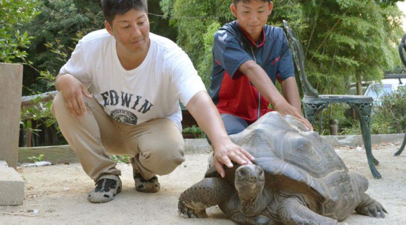 Un padre y su hijo encuentran a la tortuga que se escapo de un zoo en Japón
