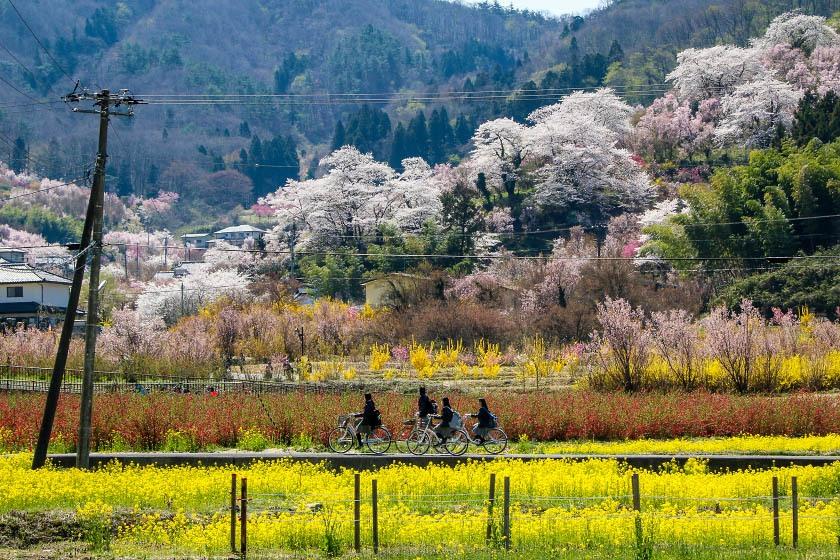 Hanamiyama Park