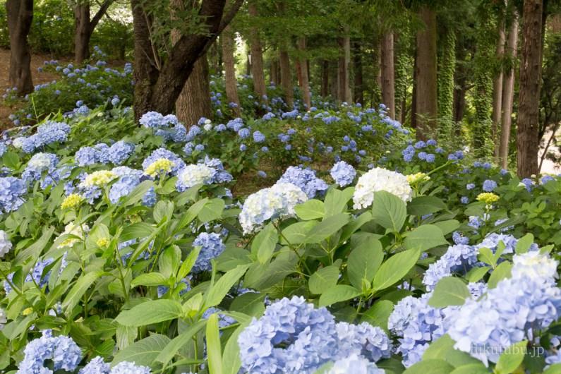 Doaidate Park fukushima
