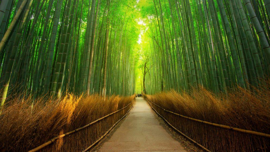 Bosque de Bambú Arashiyama