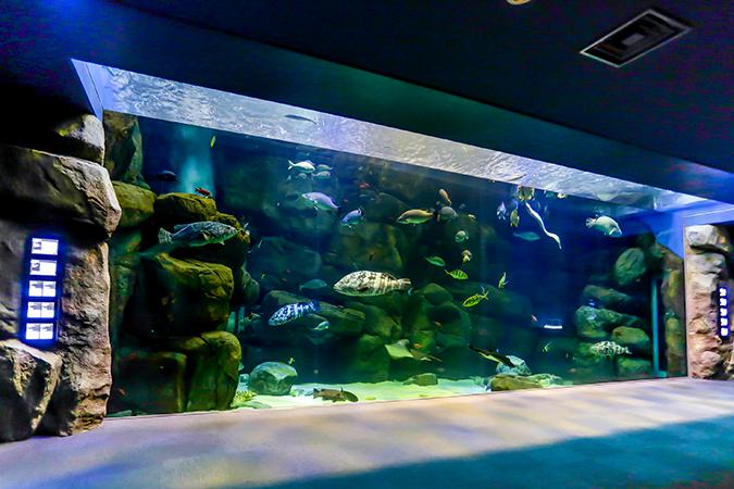 public aquarium miyajima
