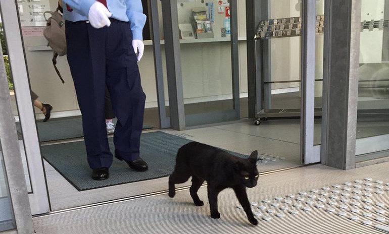 gatos museo hiroshima