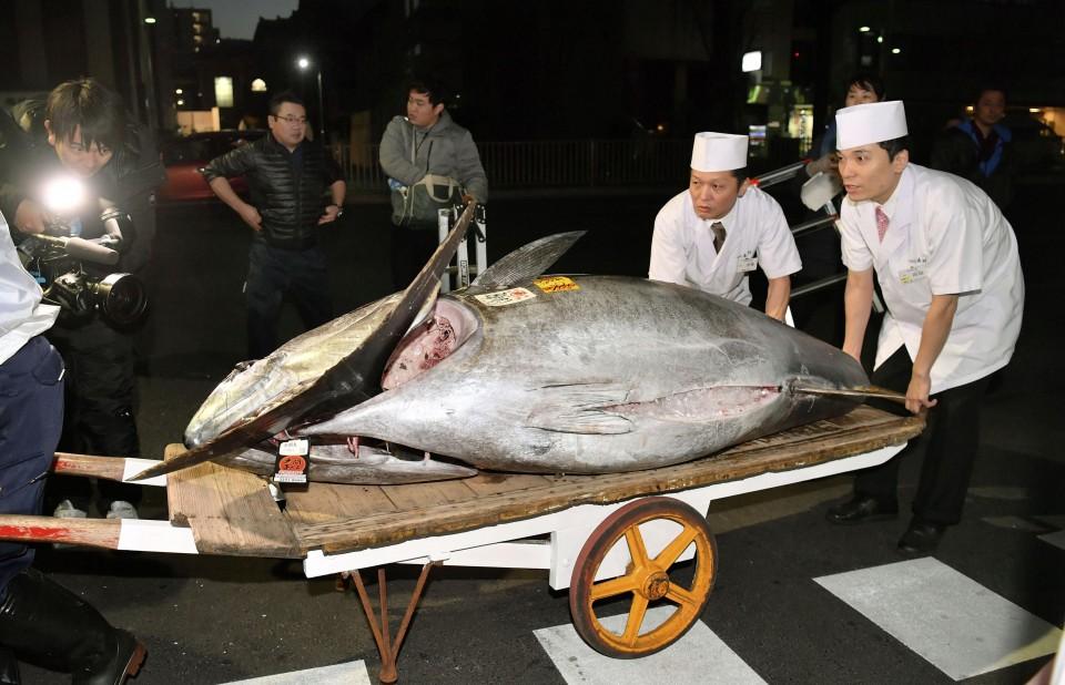 atún japón