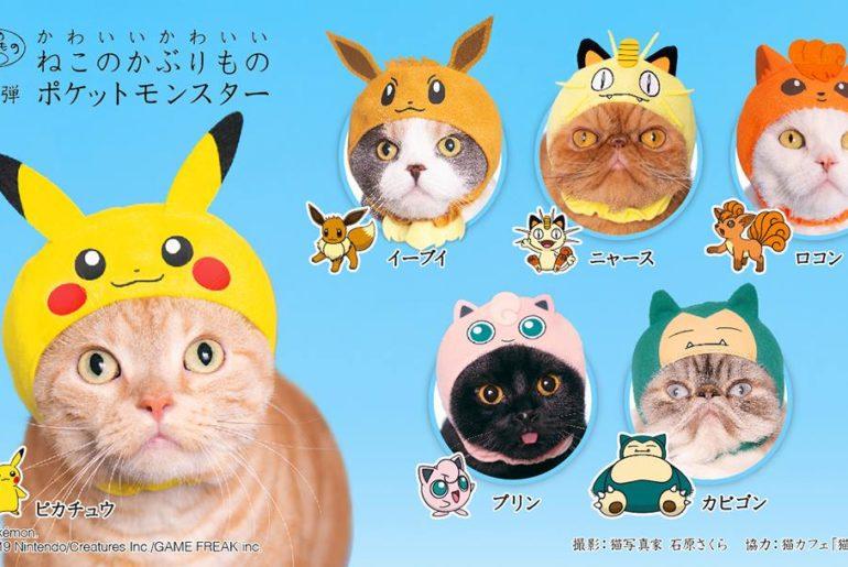 Pokémon gorros para gatos