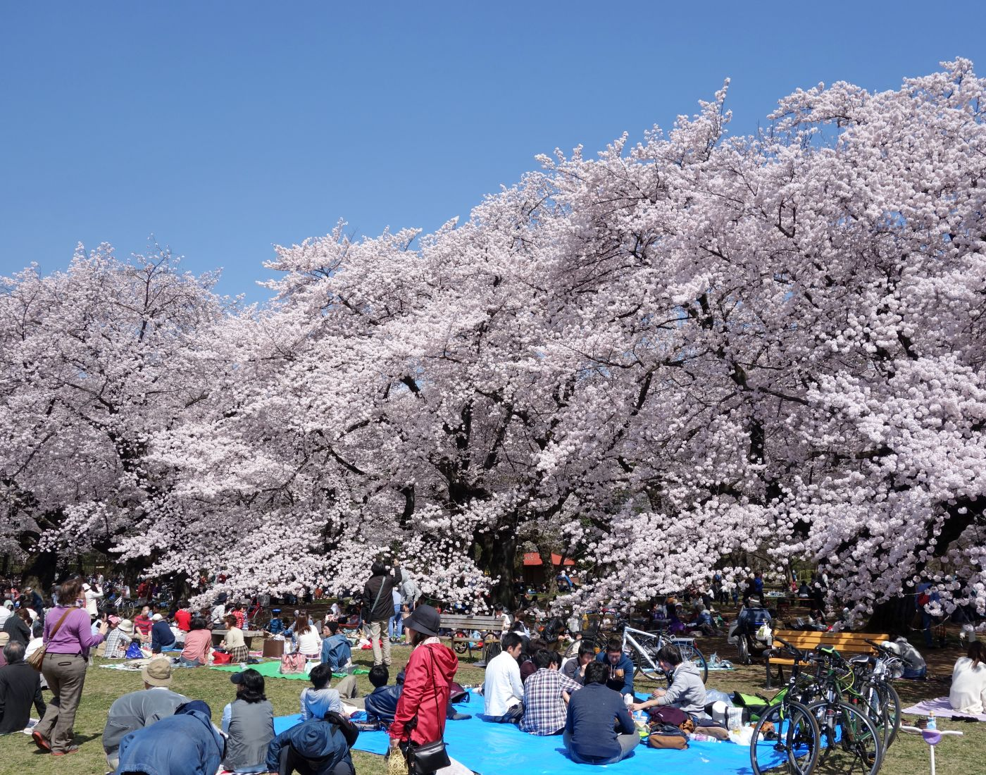 sitios donde disfrutar del hanami en Tokio
