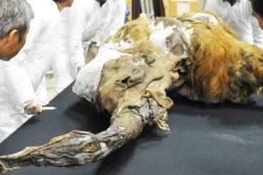 científicos mamut